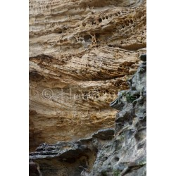 Sandstone Cliff Face