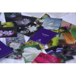 Flower Essence Affinity Cards